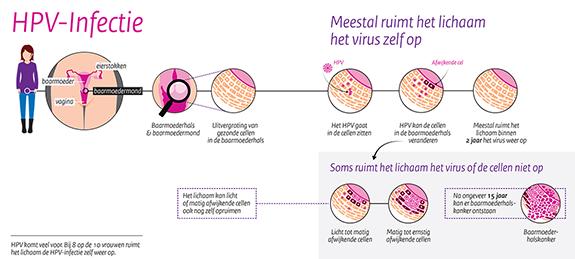Hpv vírus uitstrijkje - HPV vírus, HPV terjedése